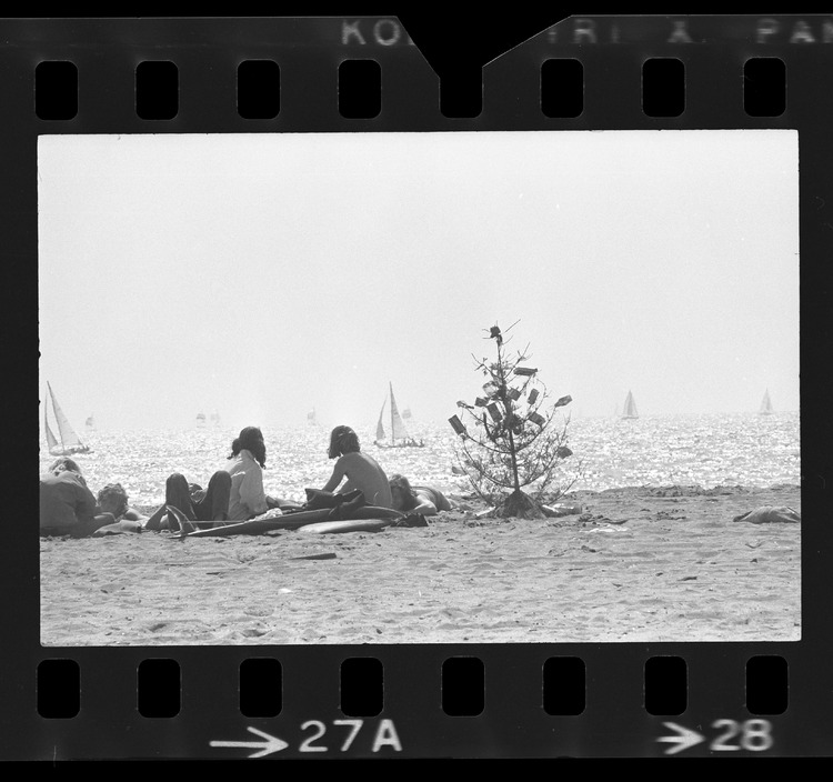 Beach goers with discarded Christmas tree on shoreline with sailboats in background at Marina del Rey, Calif., 1973, Los Angeles Times Photographic Archive, UCLA Library Special Collections
